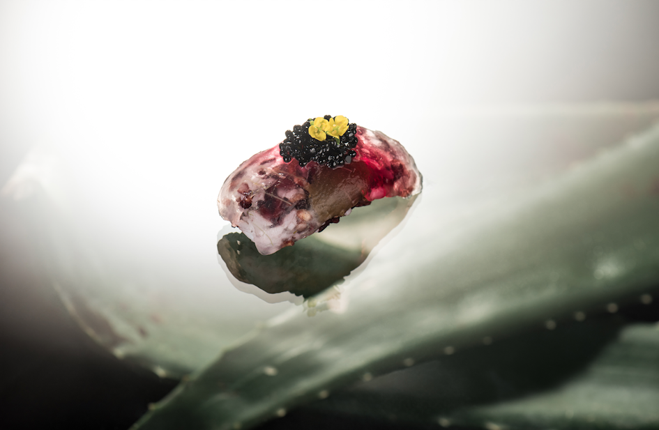 Aloe Nigiri | Enfin by James Won | Food For Thought