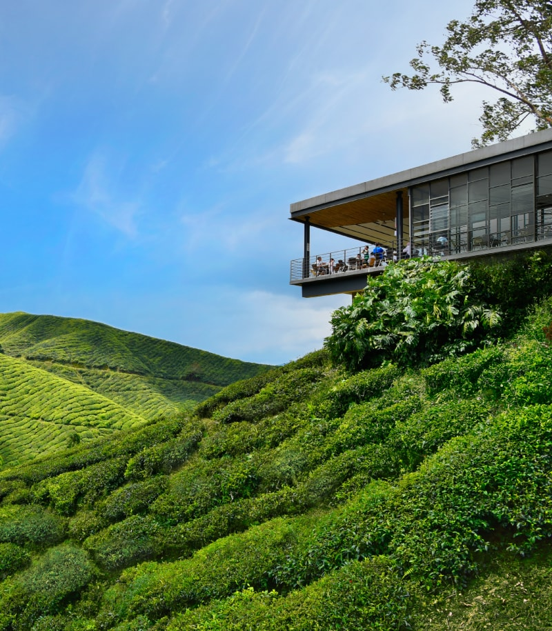 BOH Tea Center | Things To Do in Cameron Highlands | Food For Thought