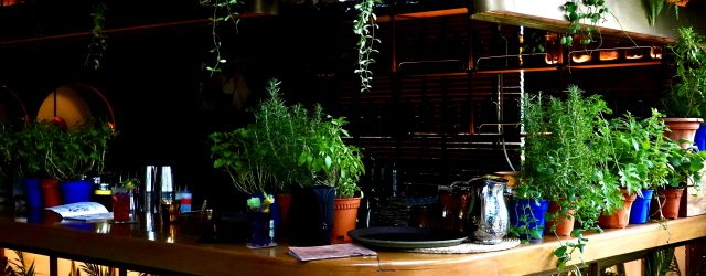 Bar | The Curious Gardener | Food For Thought