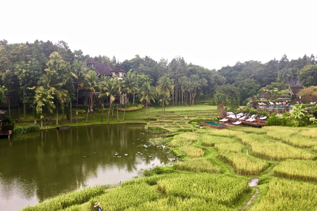 Paddy Fields | What to do in Chiang Mai | Food For Thought