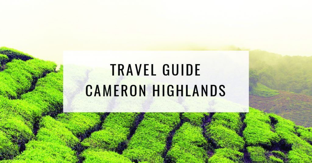 Things To Do in Cameron Highlands | Food For Thought