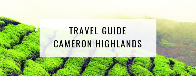Travel Guide: Things To Do in Cameron Highlands